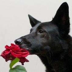 Eine Blume, Hund und einen Foto, mehr braucht ihr nicht für ein tolles Hundeshooting! Auf meinem Blog zeige ich euch Tipps und Tricks, wie ihr einfach und schnell ein blumiges Hundefoto schießen könnt! (Link in Bio)