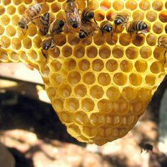 Los superpoderes de la miel de manuka