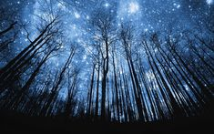 Starry Night Over the Forest by hdw #Photography #Starry_Night