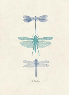 libellules  #mediumfashiongallery