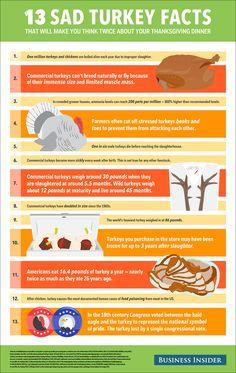 13 Sad Turkey Facts