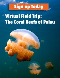 """Coral Reefs: Nature's Amazing Underwater Cities. Join a free, live Virtual Event for grades 3-8 on May 19 at 12 pm ET. (Or watch the recorded event later.) Expert scientist, Marine Biologist Stephanie Wear, will take students on a deep dive to explore one of the """"seven underwater wonders of the world."""""""