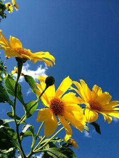 Yellow flower in blue sky
