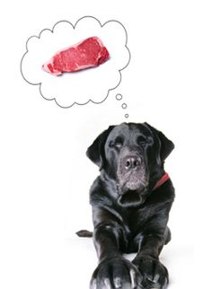 Homemade Dog Food Recipes For Skin Allergies