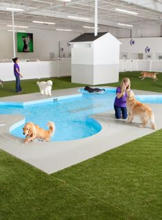 Gensler designs JFK animal airport terminal with spa services Canis, Real Estate Pictures, Pet Spa, Pet Hotel, Pet Resort, Dog Daycare, Pet Travel, Dog Boarding, Dog Cat