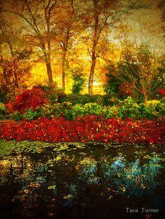 """Autumn the Japanese Gardens 4"" by Tara Turner | Redbubble"
