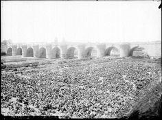 Lechugas en el Puente de Toledo