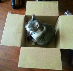 En una caja llega un lindo Gatito!