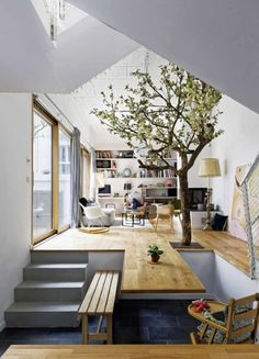 Why don't we have trees like this in our homes?