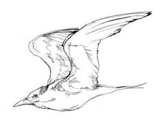 how to draw flying birds step 6