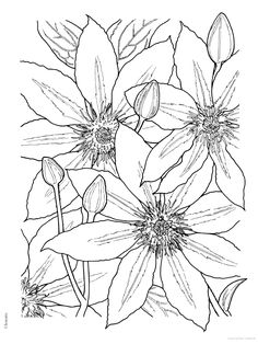 Flower Coloring Pages, Coloring Book Pages, Coloring Sheets, Mandala Coloring, Dover Publications, Silk Painting, Printable Coloring, Colorful Pictures, Flower Patterns