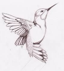 Bildergebnis für Vogelzeichnungen