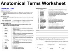Papers Anatomy And Terminology Fa0ae, Simple Anatomical