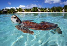 we could snorkel with turtles!