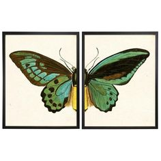 A split turquoise butterfly print framed in copper and black shadowboxes. Framed Art Prints, Fine Art Prints, Butterfly Frame, Frame Crafts, Summer Art, Shadow Box, Wall Art Decor, Original Art, Illustration Art