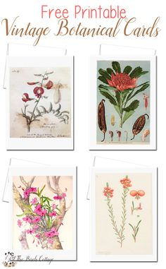 Download your free printable vintage botanical illustration cards from The Birch Cottage