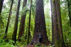 Valley of the Giants Loop Hike - Hiking in Portland, Oregon and Washington