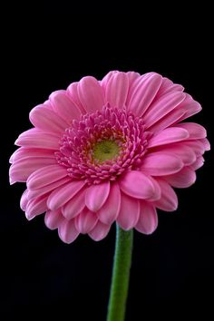 Terrific Pictures Pink Flowers centerpiece Strategies The reddish flower is a fairly general image of love and passion. Thus wide-spread, the fact is, of which the Amazing Flowers, Beautiful Roses, Pretty Flowers, Pink Flowers, Flowers Pics, Gerbera Flower, My Flower, Flower Art, Pink Flower Centerpieces