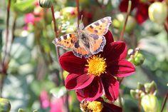 Schmetterlingsparadies