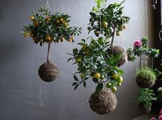 """""""I created 3-D crochet webs as a base or skeleton for a miniature world.  This needed plants to prevent the whole thing for becoming too clumpy, I came up with the idea to hang the plants as little floating islands in the holes of the web..."""""""