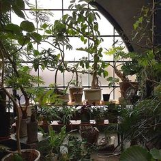 House Plant Goodness. #plants #indoorjungle #houseplants