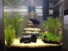 My Buddha Zen Aquarium
