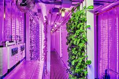 Announcing Square Roots. An urban farming accelerator that will empower of millennials to become entrepreneurs. Indoor Farming, Indoor Aquaponics, Aquaponics System, Hydroponic Farming, Permaculture, Vertical Farming, Square Roots, Marijuana Plants, Cannabis Growing