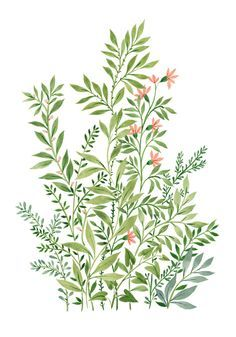 an art print by Vikki Chu Plants 2 - A gallery-quality illustration art print by Vikki Chu for sale.Plants 2 - A gallery-quality illustration art print by Vikki Chu for sale. Watercolor Flowers, Watercolor Paintings, Plant Background, Plant Drawing, Plant Art, Plant Painting, Plant Illustration, Watercolour Illustration, Pattern Illustration