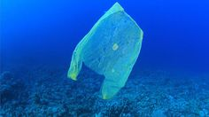 In #Florida, it's #illegal to #ban #plastic bags — but St. Pete could do it anyway! And that's a Very #Good Thing! 😀http://www.cltampa.com/news-views/environment/article/20864683/in-florida-its-illegal-to-ban-plastic-bags-but-st-pete-could-do-it-anyway