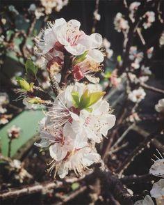 Best Garden Instagram Accounts | British Vogue