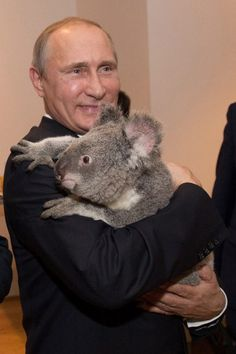 President Vladimir Putin cuddling a Koala Bear at the Summit 2014 in Australia. The koala doesn't seem to be too comfortable here. United Russia, Amor Animal, Baby Koala, Koala Bears, Funny Photoshop, Best Funny Pictures, Random Pictures, Obama, Koalas