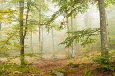 Misty forest, Vånga