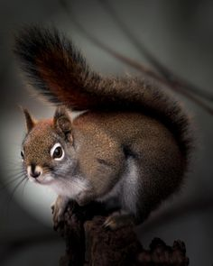 In The Light by Jimmy  Through My Looking Glass on 500px #squirrel