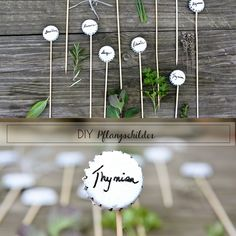 Titantina's Ideen: DiY Pflanzetiketten aus Bierkapseln