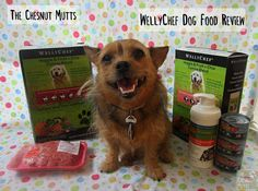 WellyChef Dog Food Base Mix Review - Just add your own protein! #sponsored Where To Buy Dogs, Dog Food Reviews, Dog Nutrition, Dog Information, Homemade Dog Food, Cat Food, Dog Treats, Dog Cat, Dog Things