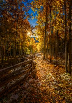 The Fall Path | Up Near Silver Jack Reservoir After Sunrise | Colorado | Photo By Toby Harriman