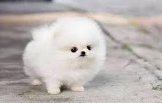 honden puppies - Google zoeken