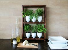 Gardening in your kitchen