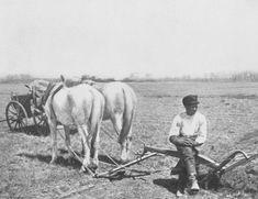Early Settler Farming | ... American farmhand on a Flatbush farm in the early twentieth century