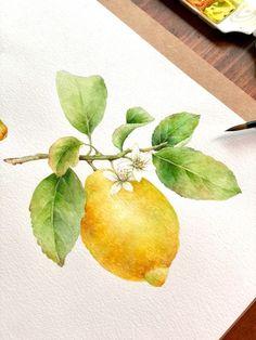 Lemon Watercolor, Watercolor Drawing, Watercolor Cards, Watercolor Illustration, Watercolor Flowers, Watercolor Paintings, Botanical Drawings, Botanical Art, Lemon Drawing