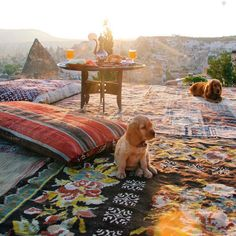 Cappadocia-Turkey travel diary - hot air balloons, puppy kisses, Sunrises & Sultan Cave Suites // Picture by PILOTMADELEINE #goreme #kapadokya #cappadocia #puppy #Turkey