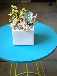 Small Succulent Arrangement, Succulent Planter, Succulent Centerpiece
