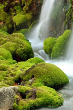 Chatsubomi Moss Park, Gunma, Japan.  A whole park for moss, can I go there?!