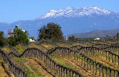 Temecula Valley Vineyards ~ Wine Country So. California!