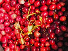 Cranberry Relish that will make you a believer....