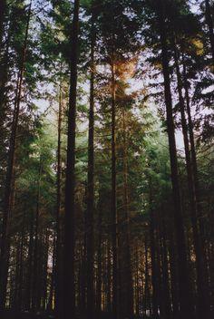 woodsndirt:  lemon-infused-feminist:  nature / spiritual  +