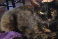 Adopt A Pet Tuesday: Poppet, Orange Paw, Finley - Northern Michigan's News Leader