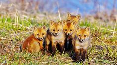 Baby Fox was a 1990s British trip hop band made up of members Christine Ann Leach, Alex Gray and Dwight Clarke.