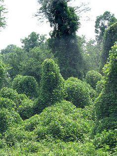 8 Weeds You Can Eat Rodale's Organic Life Healing Herbs, Medicinal Plants, Organic Gardening, Gardening Tips, Wild Edibles, Edible Plants, Survival Food, Natural Medicine, Natural Cures