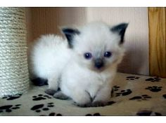 once he was a tiny tiny fluff bubb